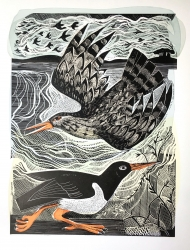 Redshank And Oystercatcher Print