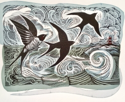 Swallows And Seas Print