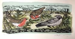 Robin Song & Wagtail Print
