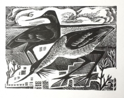 A is for Avocet Print