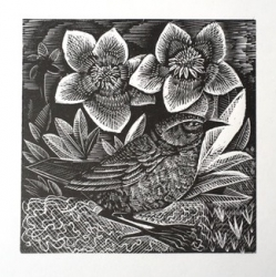 D is for Dunnock Print