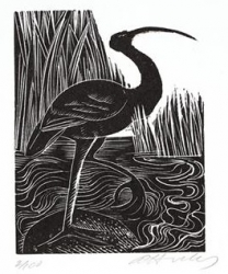 I is for Ibis Print