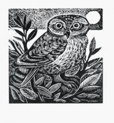 Little Owl Print