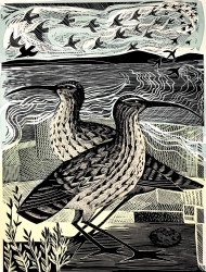 Two Curlews Print