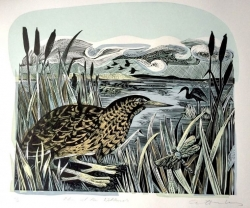 Bittern and Wetland Print