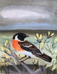 Stonechat Painting