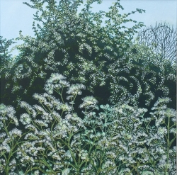 May Tree & Cow Parsley Painting
