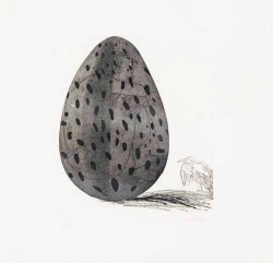 Boy Hidden in an Egg Print by David Hockney