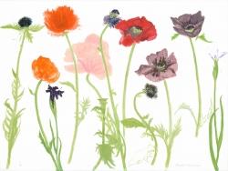 3 Oriental Poppies Print