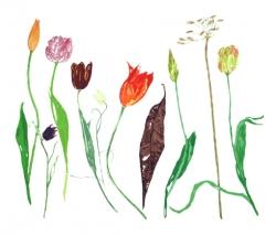 1 Tulips Print