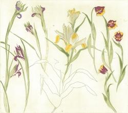 6 Irises Lilies Tulips Print