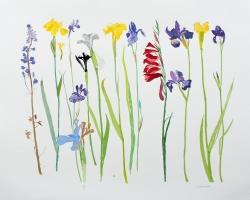 2 Wild Flowers Print
