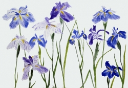 Irises Print