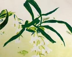 Orchidaceae Coelogyne Cristata Print
