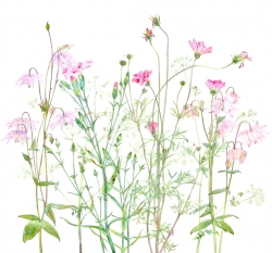 Aquilegia and Carnation Painting by Helen Millar