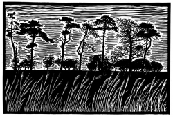 Scots Pines Print