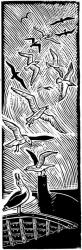 Seagulls Print