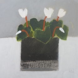 Cyclamen Painting