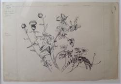Wild Flowers Wayside II (Knapweed, Malva Sylvestria,Silverweed) Painting