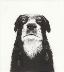 Boss Dog Print