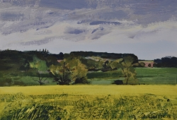 Rape Field Harkstead Painting