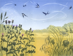 Thistledown Swallows Print