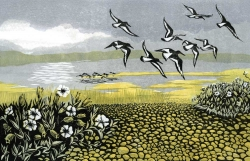 Blakeney Oystercatchers Print