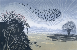 Starling over Hawthorn Print