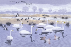 Seven Swans Print