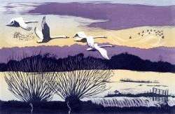 Winter Swans Print