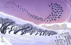 December Starlings Print