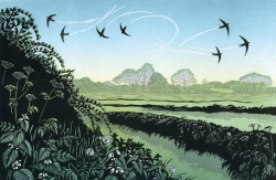 Swifts Return Print