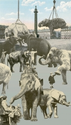 The Paris Suite: Elephants Print