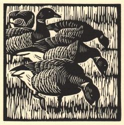 Brent Geese Print
