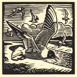 Black Headed Gull Print