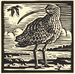 Curlew Print