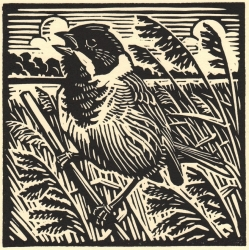 Reed Bunting Print