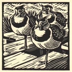 Lapwings Print