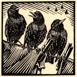 Starlings Print