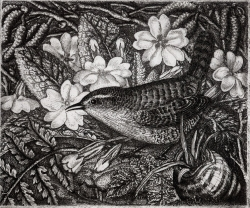 Wren and Primrose Print by Robin Tanner