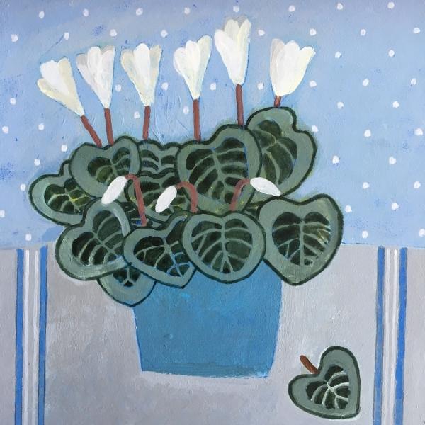 White Cyclamen in blue pot