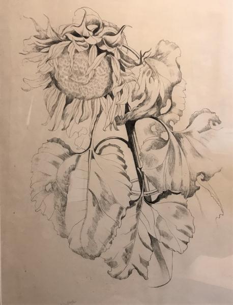 Sunflower by John Nash CBE RA (1893 - 1977)