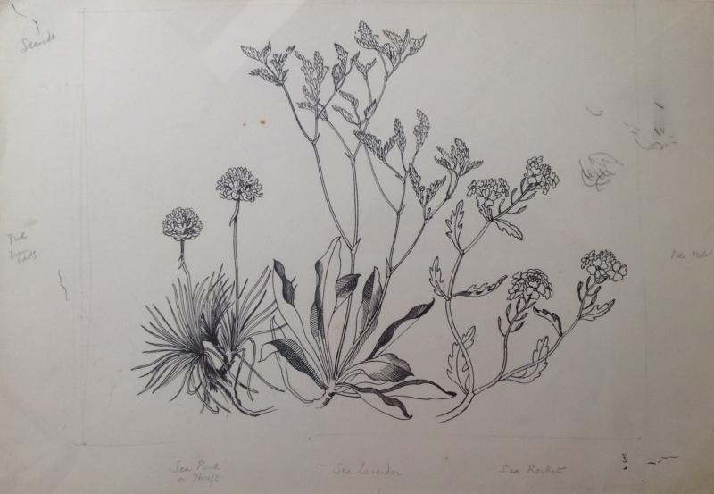 Wild Flowers- Seaside  (Thrift, Sea, Lavender, Sea Rocket)