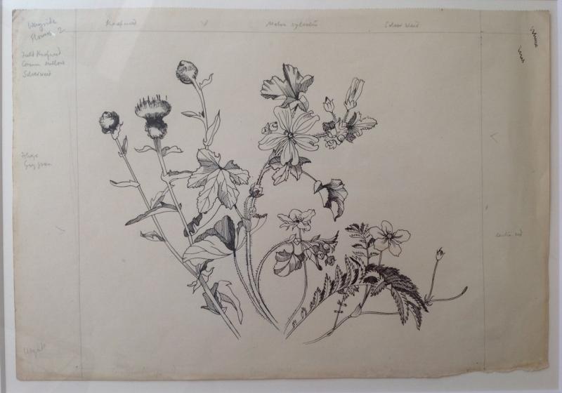 Wild Flowers Wayside II (Knapweed, Malva Sylvestria,Silverweed)