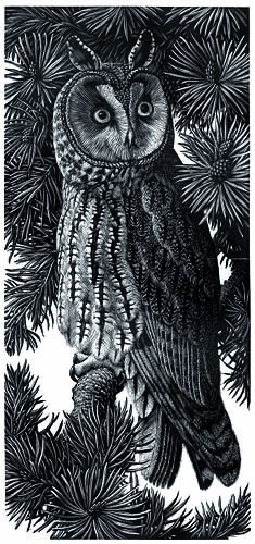 Long Eared Owl by Charles  F Tunnicliffe OBE RA (1901 - 1979)