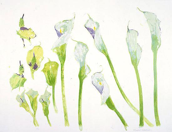 5 Arum Lilies