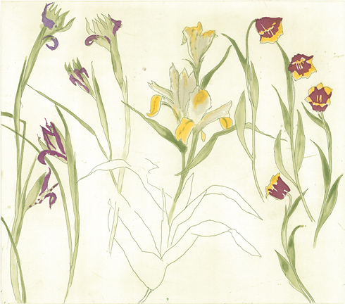 Irises Lilies Tulips